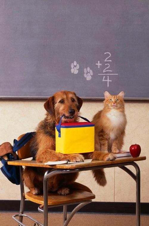 Woofland - Αστείες φωτογραφίες σκύλων στο σχολείο - Γουφαμάρες 1
