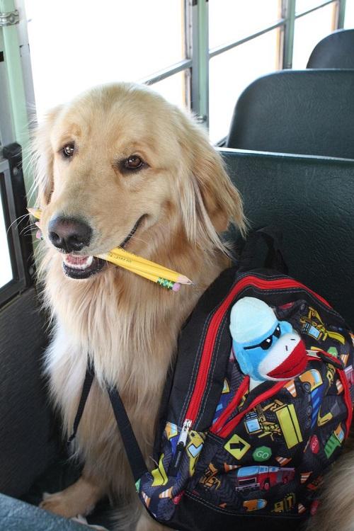 Woofland - Αστείες φωτογραφίες σκύλων στο σχολείο - Γουφαμάρες 2