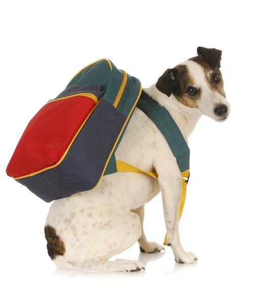 Woofland - Αστείες φωτογραφίες σκύλων στο σχολείο - Γουφαμάρες 4