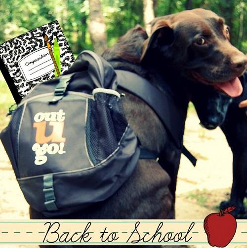 Woofland - Αστείες φωτογραφίες σκύλων στο σχολείο - Γουφαμάρες 5