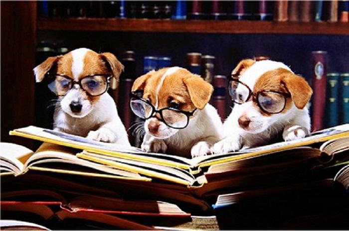 Woofland - Αστείες φωτογραφίες σκύλων στο σχολείο - Γουφαμάρες 6