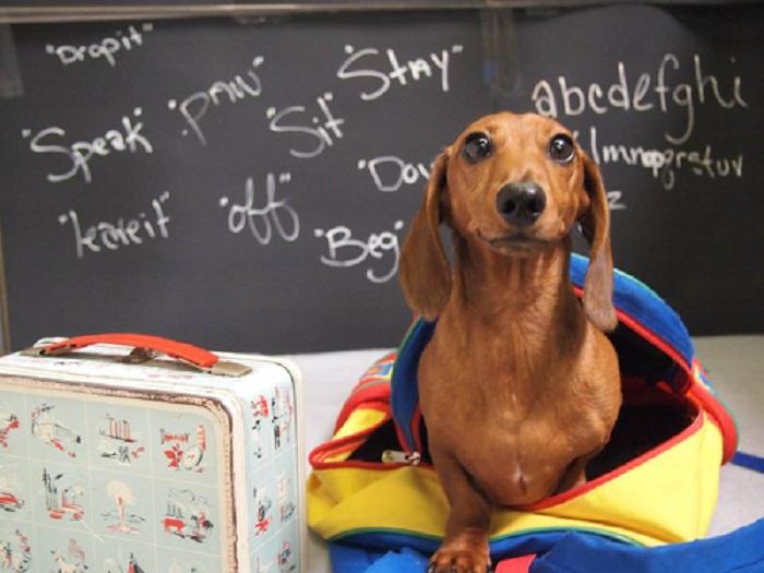 Woofland - Αστείες φωτογραφίες σκύλων στο σχολείο - Γουφαμάρες 7