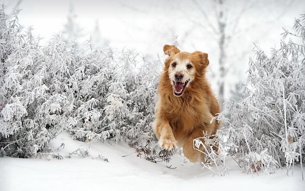 Woofland - Αστείες φωτογραφίες σκύλων στο χίονι - Γουφαμάρες 1