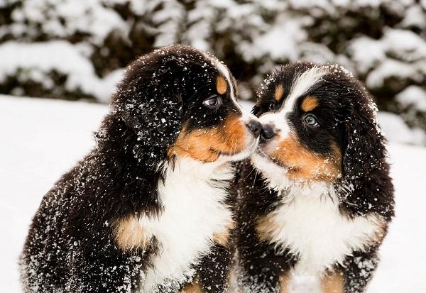 Woofland - Αστείες φωτογραφίες σκύλων στο χίονι - Γουφαμάρες 2