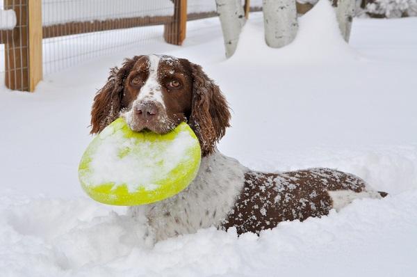 Woofland - Αστείες φωτογραφίες σκύλων στο χίονι - Γουφαμάρες 3