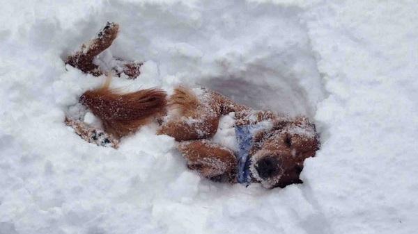 Woofland - Αστείες φωτογραφίες σκύλων στο χίονι - Γουφαμάρες 5