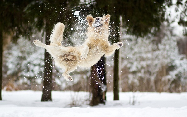 Woofland - Αστείες φωτογραφίες σκύλων στο χίονι - Γουφαμάρες 6