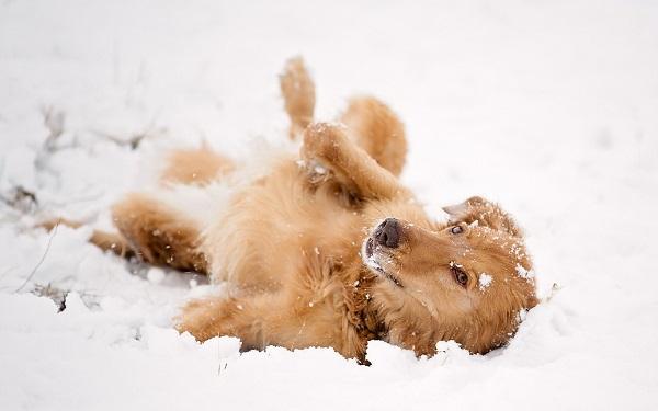 Woofland - Αστείες φωτογραφίες σκύλων στο χίονι - Γουφαμάρες 7
