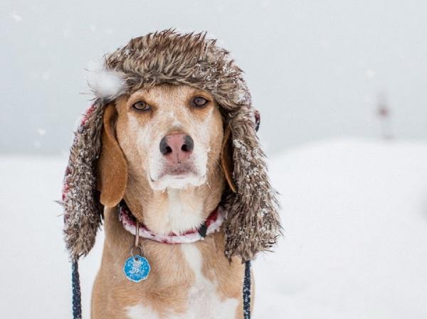 Αστείες φωτογραφίες σκύλων στο χιόνι – Γουφαμάρες