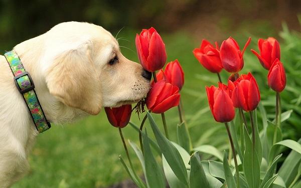 Αστείες φωτογραφίες σκύλων την Άνοιξη – Γουφαμάρες