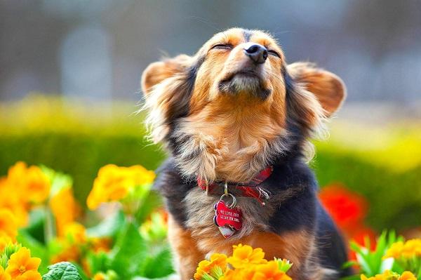 Woofland - Αστείες φωτογραφίες σκύλων την Άνοιξη - Γουφαμάρες 1