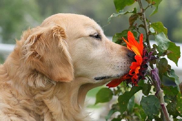 Woofland - Αστείες φωτογραφίες σκύλων την Άνοιξη - Γουφαμάρες 2