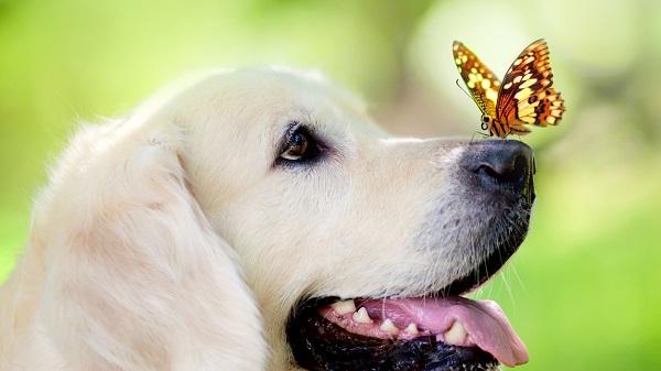 Woofland - Αστείες φωτογραφίες σκύλων την Άνοιξη - Γουφαμάρες 3