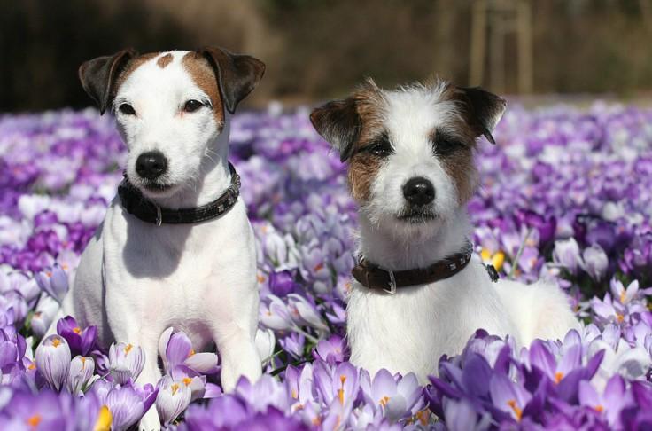 Woofland - Αστείες φωτογραφίες σκύλων την Άνοιξη - Γουφαμάρες 4