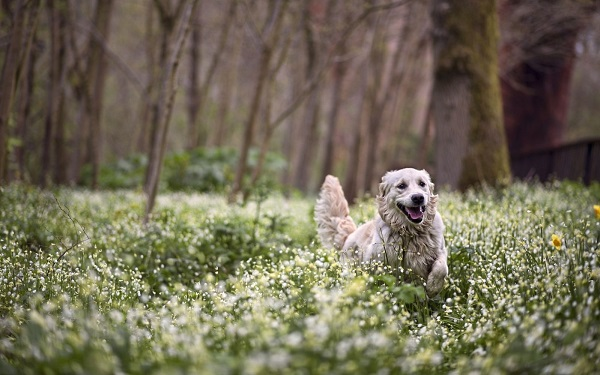 WoWoofland - Αστείες φωτογραφίες σκύλων την Άνοιξη - Γουφαμάρες 5