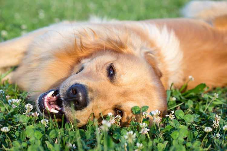 Woofland - Αστείες φωτογραφίες σκύλων την Άνοιξη - Γουφαμάρες 7