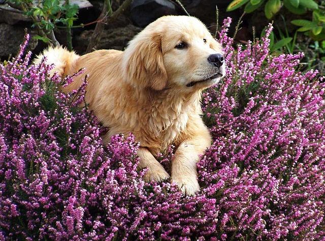 Woofland - Αστείες φωτογραφίες σκύλων την Άνοιξη - Γουφαμάρες 8