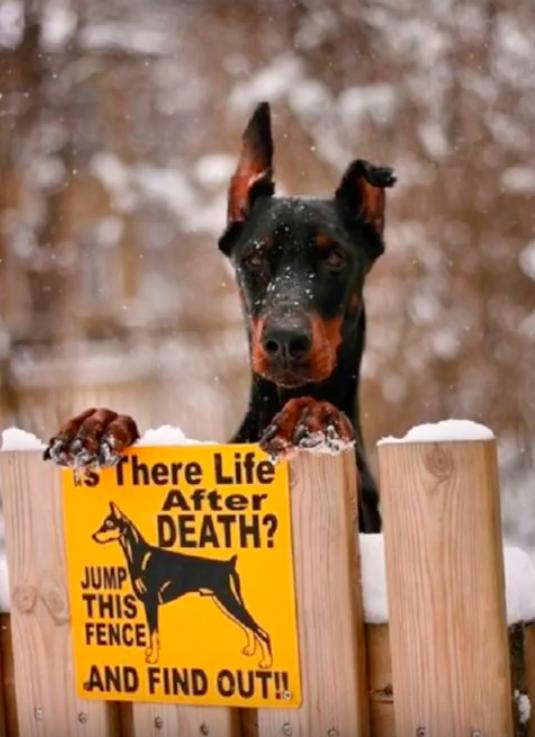Woofland - Αστείες φωτογραφίες σκύλων - Προσοχή Σκύλος - Γουφαμάρες 3