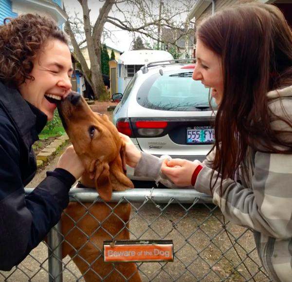 Woofland - Αστείες φωτογραφίες σκύλων - Προσοχή Σκύλος - Γουφαμάρες 4