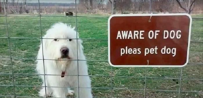 Woofland - Αστείες φωτογραφίες σκύλων - Προσοχή Σκύλος - Γουφαμάρες 7