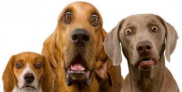 Αστείες φωτογραφίες τρομαγμένων σκύλων – Γουφαμάρες