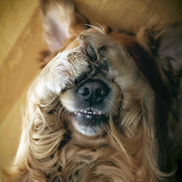 Woofland - Αστείες φωτογραφίες τρομαγμένων σκύλων - Γουφαμάρες 4