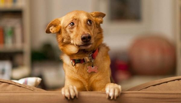 Woofland - Αστείες φωτογραφίες τρομαγμένων σκύλων - Γουφαμάρες 5