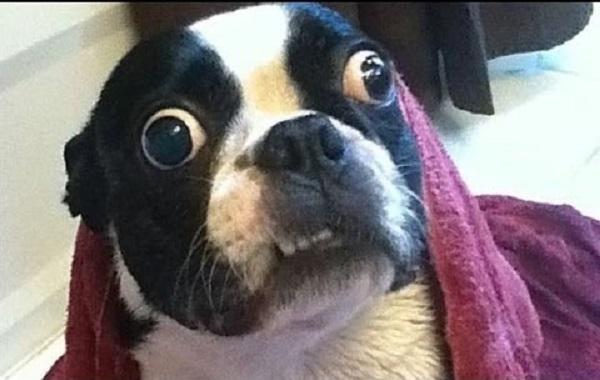 Woofland - Αστείες φωτογραφίες τρομαγμένων σκύλων - Γουφαμάρες 7