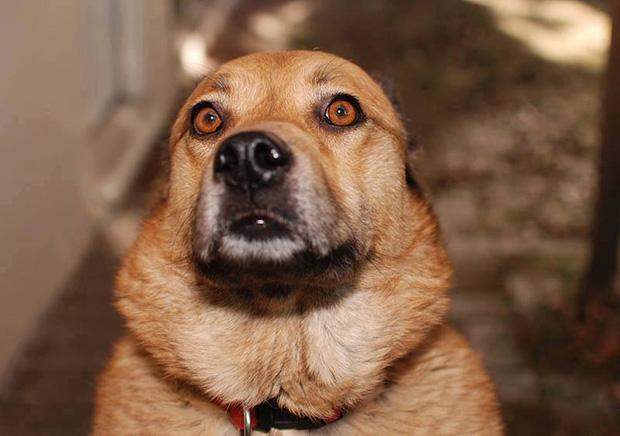 Woofland - Αστείες φωτογραφίες τρομαγμένων σκύλων - Γουφαμάρες 9