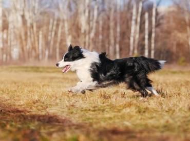 Βίντεο: Εκπαιδεύοντας το σκύλο μου στην εντολή «έλα»