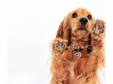 Βίντεο: Εκπαιδεύοντας το σκύλο μου στην εντολή «beg»