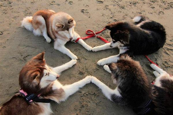 Βίντεο: Κυρίαρχος σκύλος ΔΕΝ υπάρχει – Εκπαίδευση Woofland