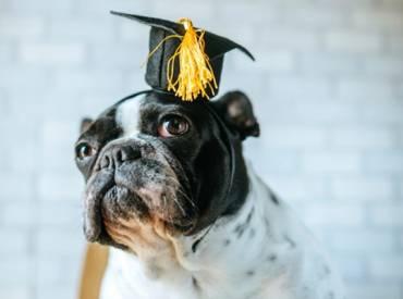 Βίντεο: Ο τέλειος σκύλος υπάρχει τελικά Εκπαίδευση Woofland