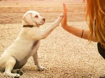 Βίντεο: Πότε τελειώνει η εκπαίδευση του σκύλου μου Woofland