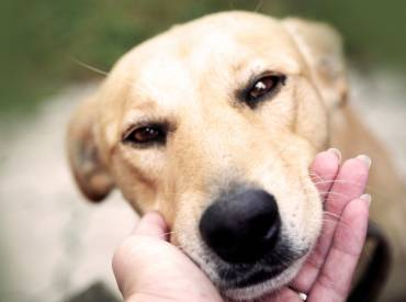 Βίντεο: Chin rest  Ασκήσεις χειρισμού σκύλων – Woofland