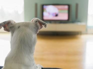 Woofland – Βλέπει ο σκύλος μου τηλεόραση; Επιστήμη Ενημέρωση