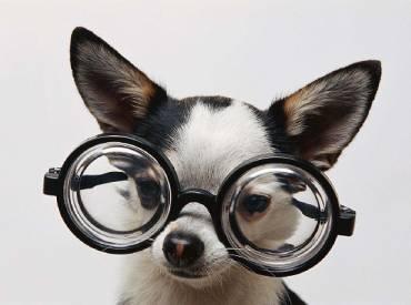 Βλέπουν οι σκύλοι χρώματα – Επιστήμη και ενημέρωση Woofland