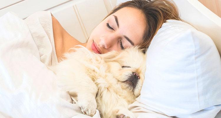 Woofland - Βοηθά ο σκύλος τις γυναίκες να κοιμούνται καλύτερα - Επιστήμη και ενημέρωση