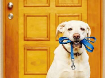 Βίντεο: Βόλτα με το σκύλο μας – Εκπαίδευση σκύλου – Woofland