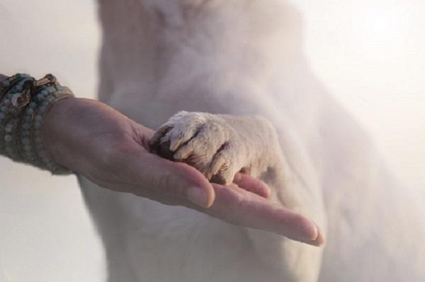 Woofland - Γιατί ο σκύλος μου δεν αφήνει να αγγίζω τις πατούσες του
