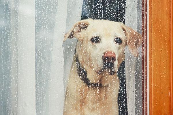 Woofland - Γιατί ο σκύλος μου δεν θέλει να βγει στη βροχή