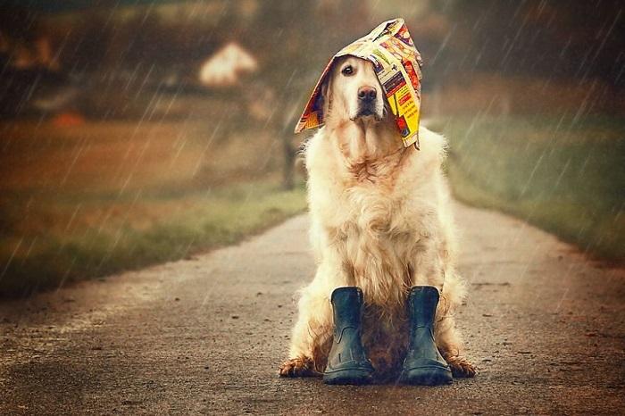 Γιατί ο σκύλος μου δεν θέλει να βγει στη βροχή – Woofland