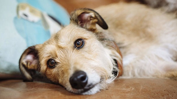 Γιατί ο σκύλος μου κάνει εμετό – Woofland