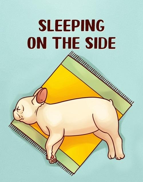Woofland - Γιατί ο σκύλος μου κοιμάται σε αυτή τη στάση 1