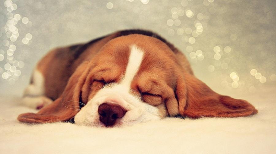 Woofland – Γιατί ο σκύλος μου κοιμάται σε αυτή τη στάση;