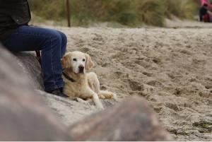 Woofland - Γιατί ο σκύλος μου κοιμάται στα πόδια μου