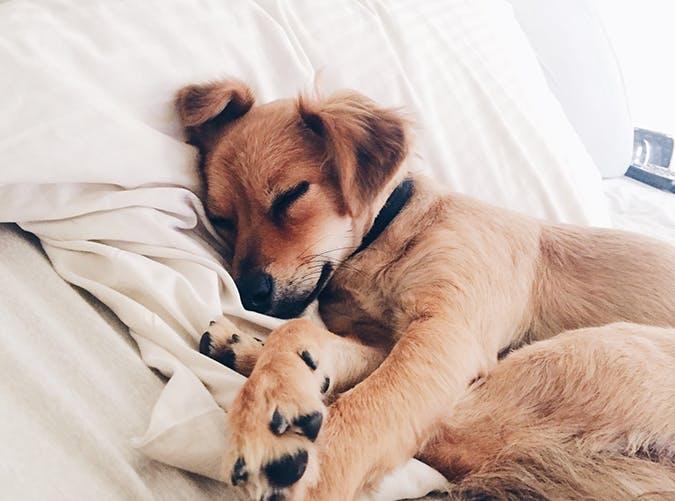 Γιατί ο σκύλος μου κοιμάται συνέχεια – Woofland
