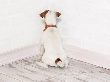 Γιατί ο σκύλος μου κοιτάζει τον τοίχο