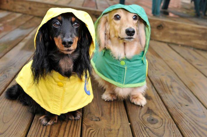 Woofland - Γιατί ο σκύλος μου μισεί τη βροχή