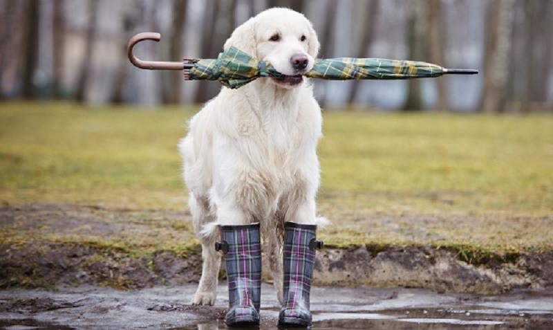 Γιατί ο σκύλος  μου μισεί τη βροχή – Woofland